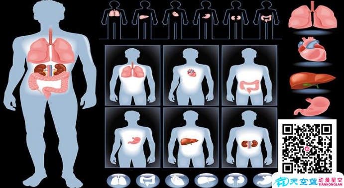 武汉医学动画制作的应用领域