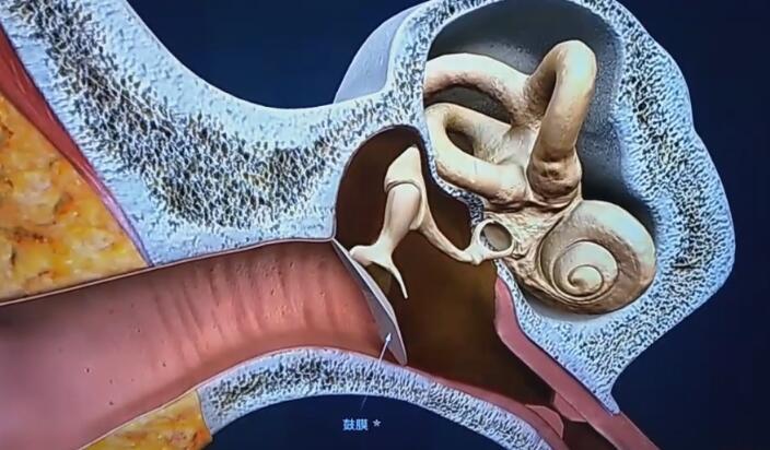 「动画制作」三维耳蜗医学动画制作及应用