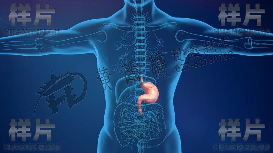 胃肠膀胱术全景.jpg