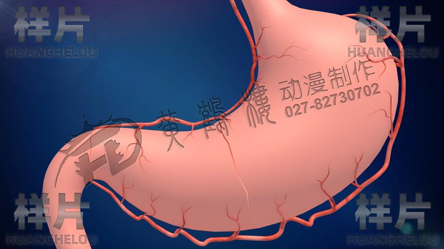 带血管的胃.jpg